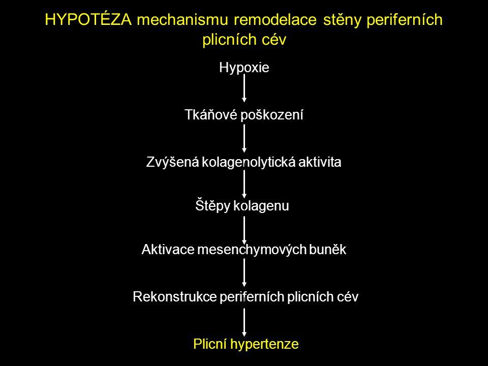 HYPOTÉZA mechanismu remodelace stěny periferních plicních cév