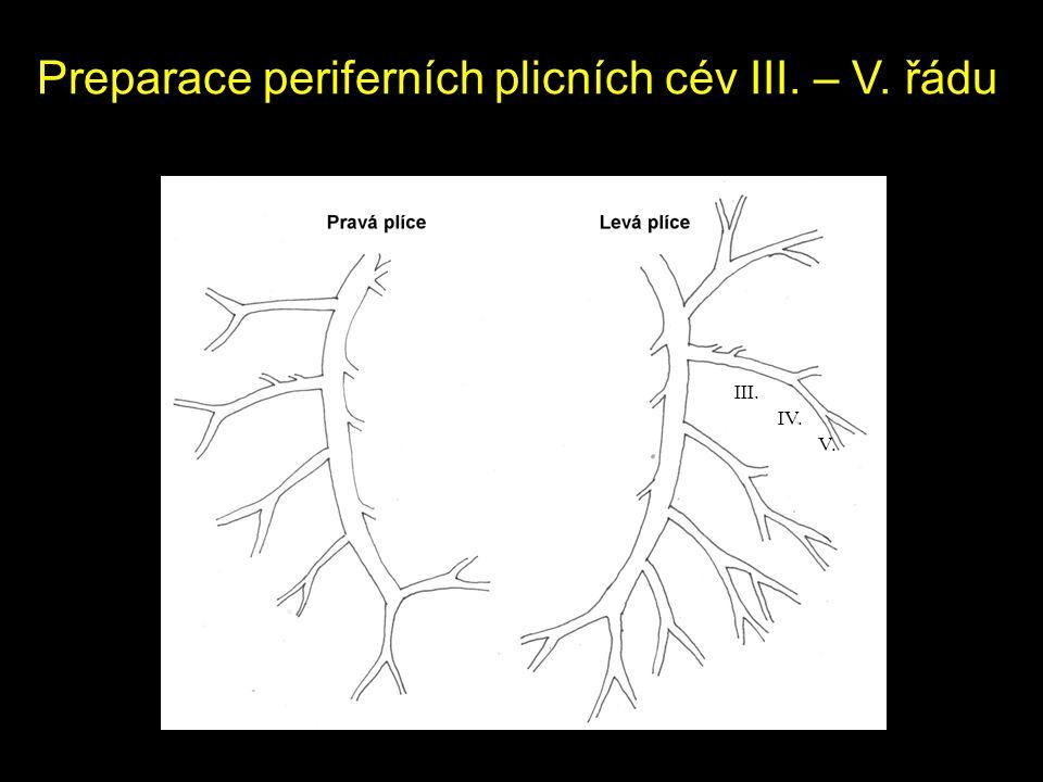 Preparace periferních plicních cév III. – V. řádu