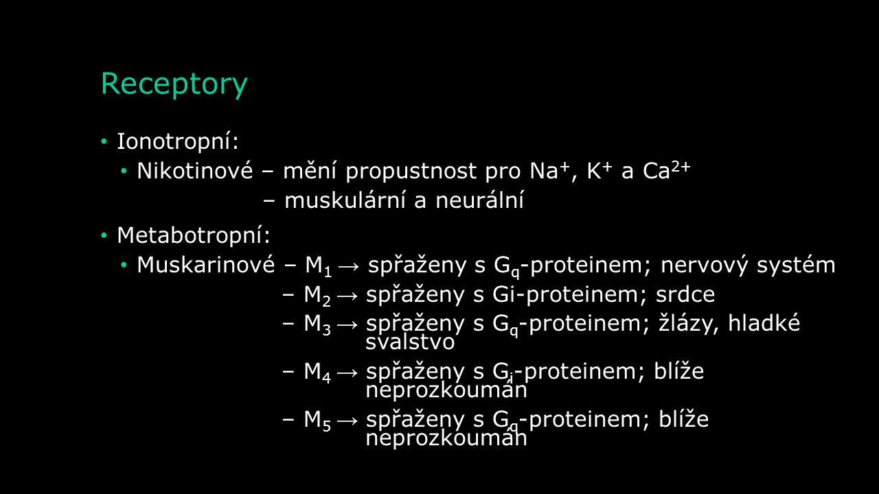 Receptory Ionotropní: Nikotinové – mění propustnost pro Na+, K+ a Ca2+