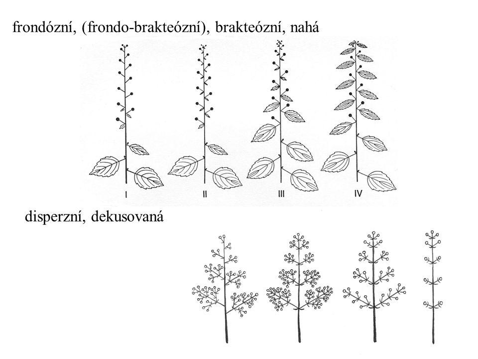 frondózní, (frondo-brakteózní), brakteózní, nahá