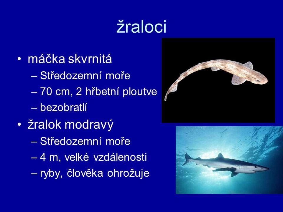 žraloci máčka skvrnitá žralok modravý Středozemní moře