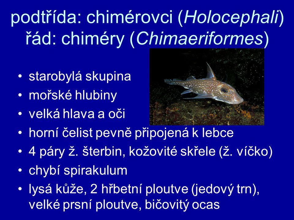 podtřída: chimérovci (Holocephali) řád: chiméry (Chimaeriformes)