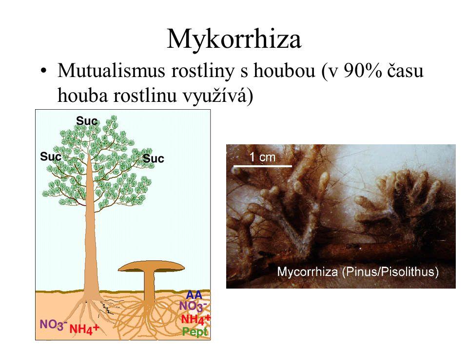 Mykorrhiza Mutualismus rostliny s houbou (v 90% času houba rostlinu využívá)