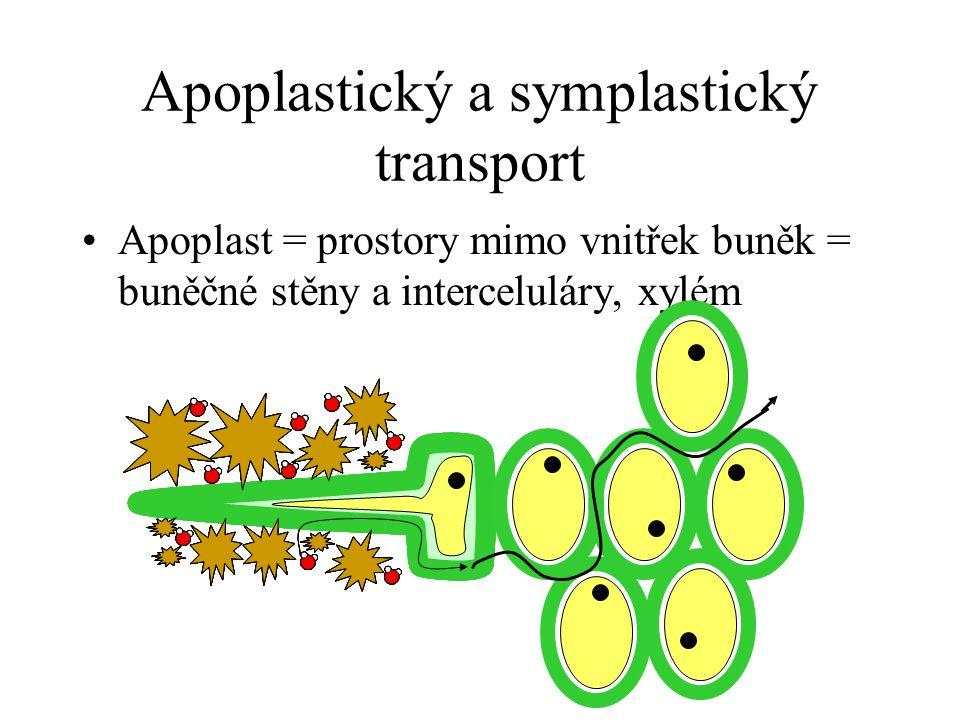 Apoplastický a symplastický transport