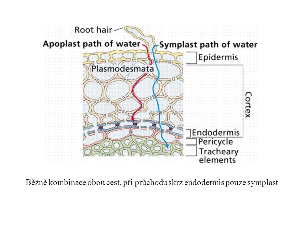 Běžně kombinace obou cest, při průchodu skrz endodermis pouze symplast