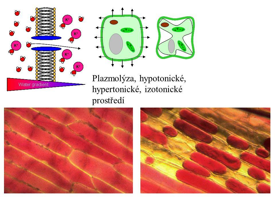 Plazmolýza, hypotonické, hypertonické, izotonické prostředí