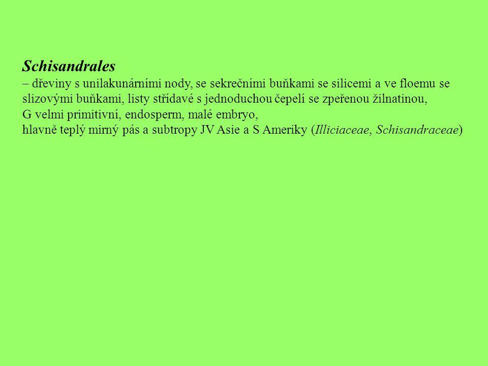 Schisandrales – dřeviny s unilakunárními nody, se sekrečními buňkami se silicemi a ve floemu se.