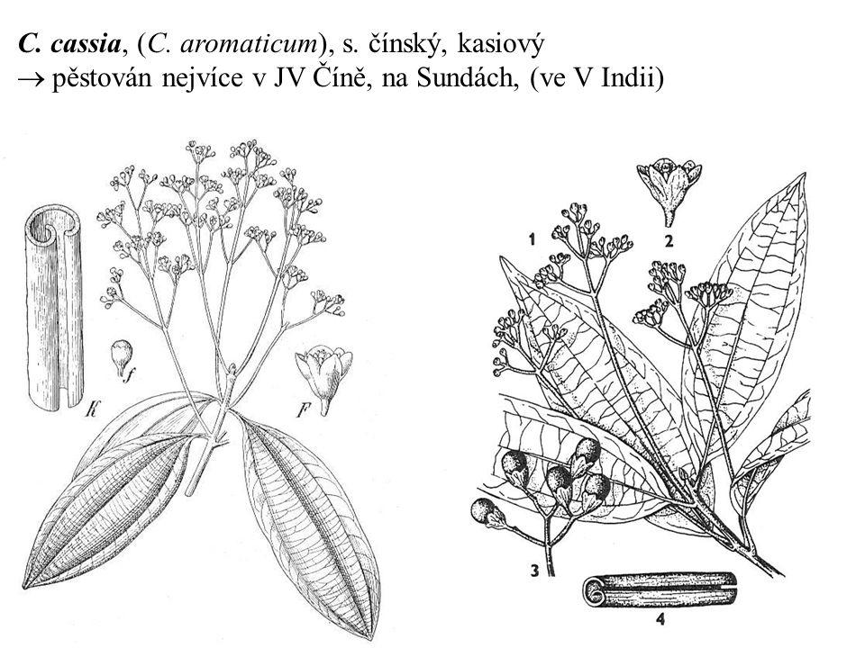 C. cassia, (C. aromaticum), s. čínský, kasiový