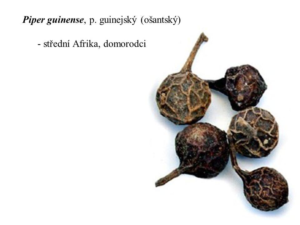 Piper guinense, p. guinejský (ošantský)