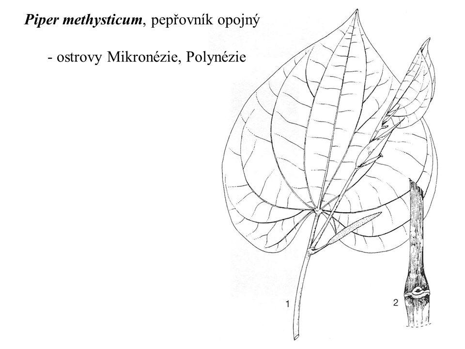 Piper methysticum, pepřovník opojný