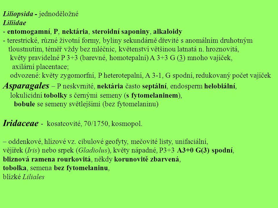 Iridaceae - kosatcovité, 70/1750, kosmopol.