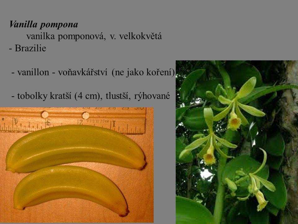 Vanilla pompona vanilka pomponová, v. velkokvětá. - Brazilie. - vanillon - voňavkářství (ne jako koření)