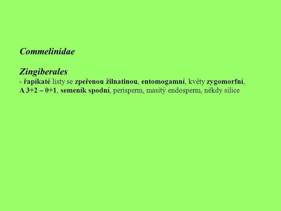 Commelinidae Zingiberales