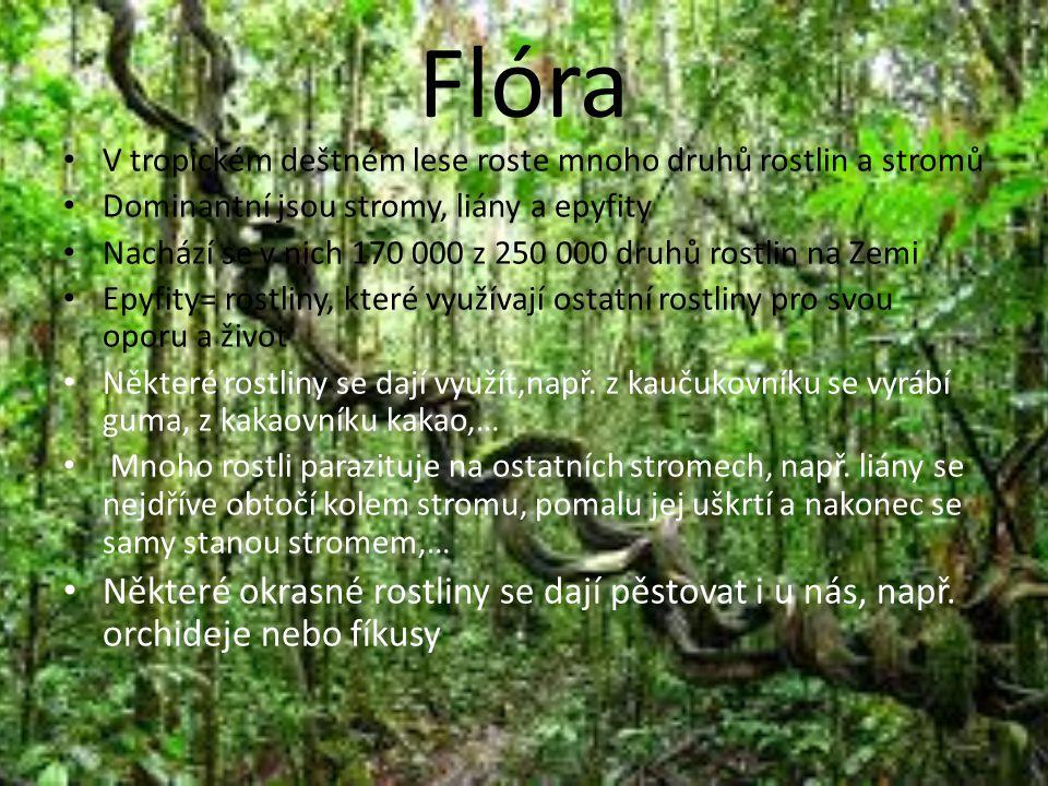 Flóra V tropickém deštném lese roste mnoho druhů rostlin a stromů. Dominantní jsou stromy, liány a epyfity.