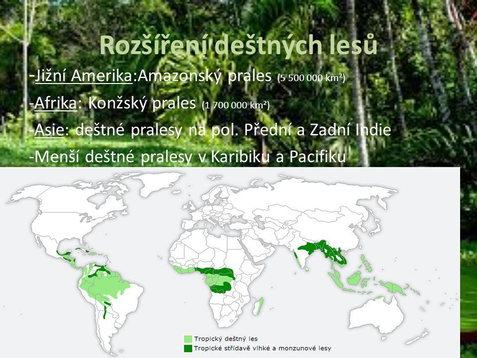 Rozšíření deštných lesů