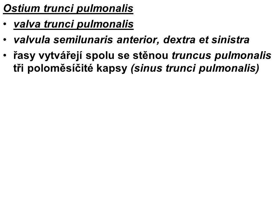 Ostium trunci pulmonalis