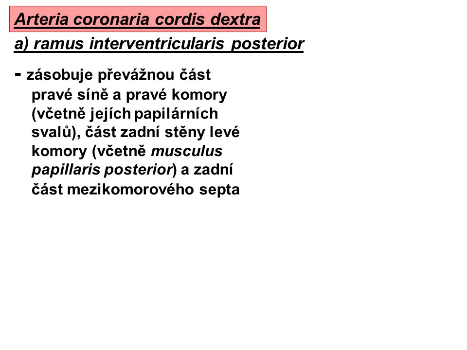 Arteria coronaria cordis dextra