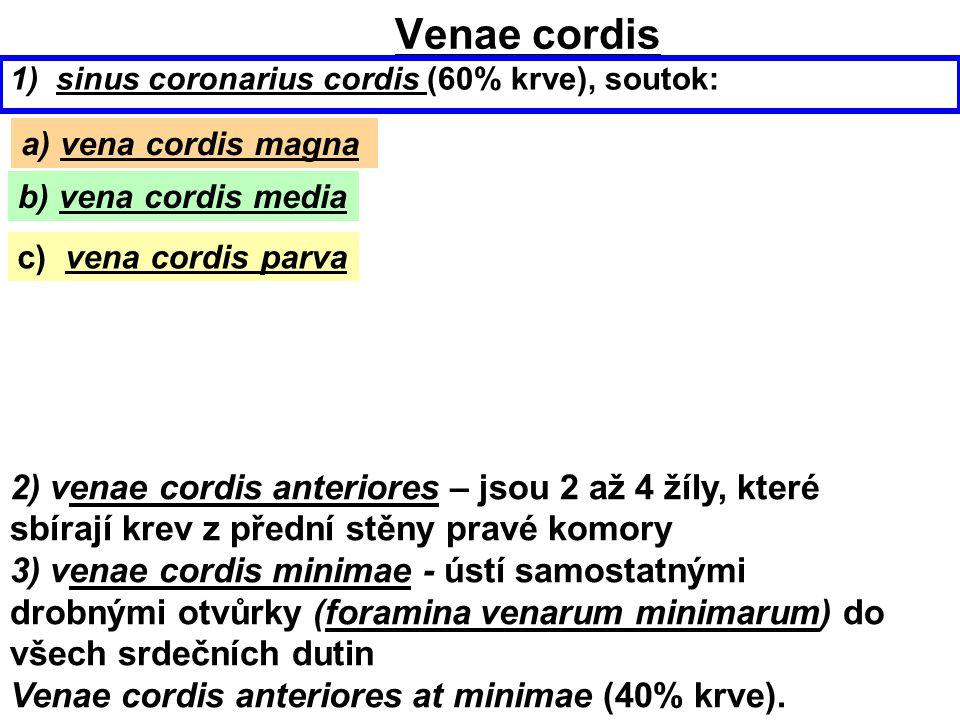 Venae cordis 1) sinus coronarius cordis (60% krve), soutok: a) vena cordis magna. b) vena cordis media.