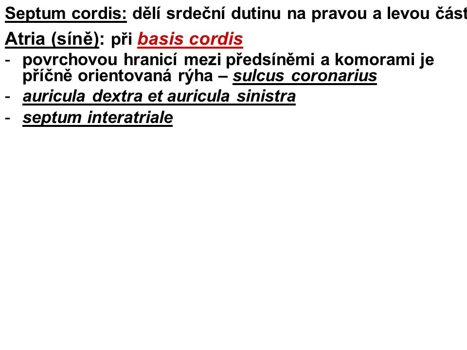 Atria (síně): při basis cordis