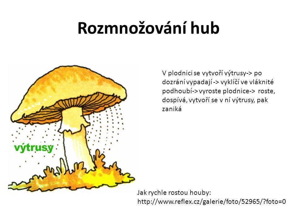 Rozmnožování hub