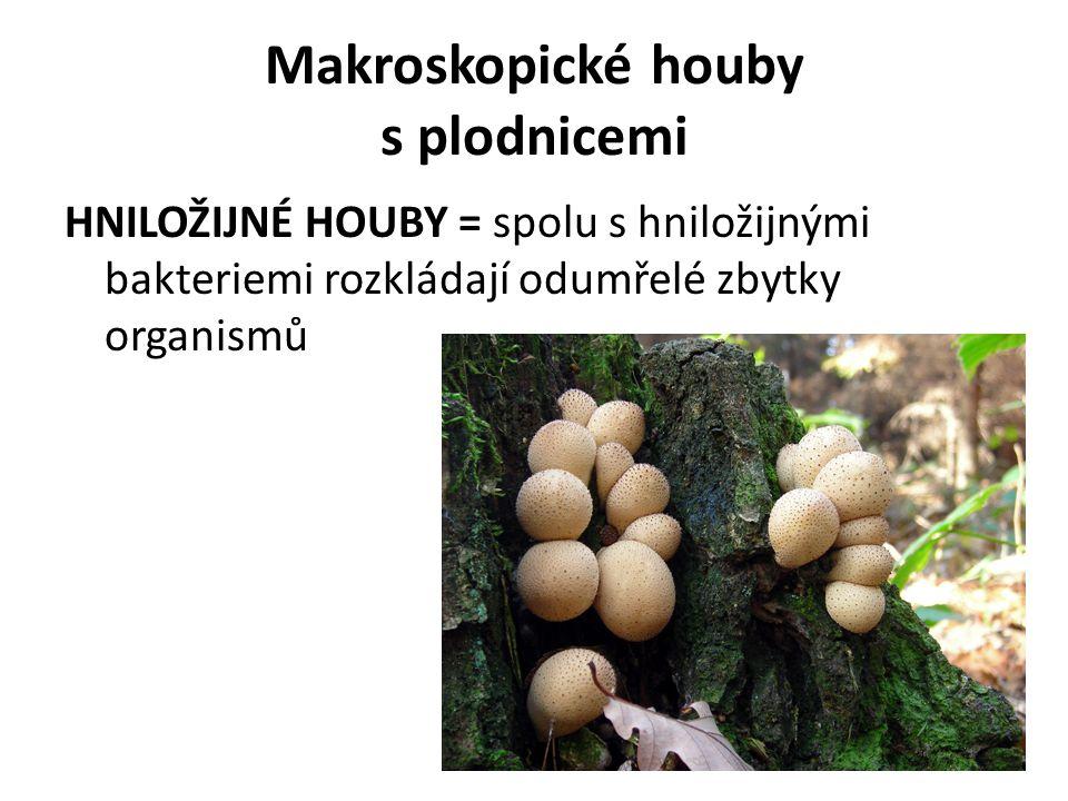 Makroskopické houby s plodnicemi
