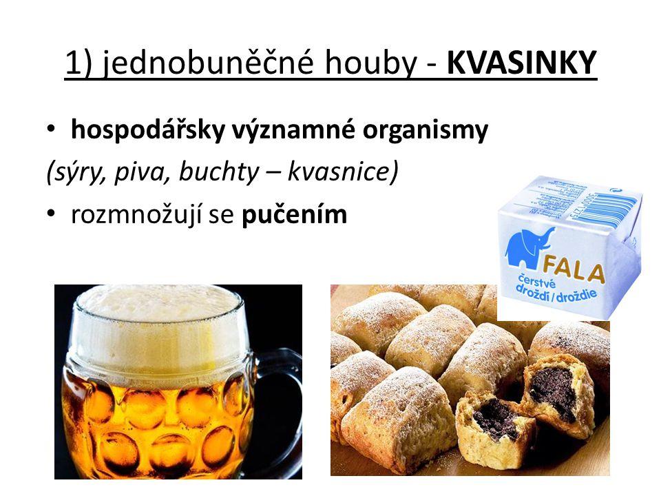 1) jednobuněčné houby - KVASINKY
