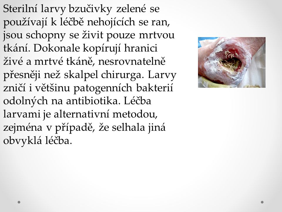 Sterilní larvy bzučivky zelené se používají k léčbě nehojících se ran, jsou schopny se živit pouze mrtvou tkání.