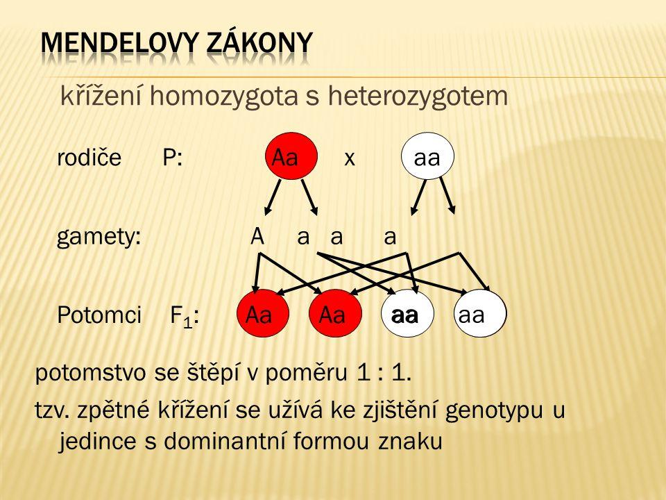 křížení homozygota s heterozygotem
