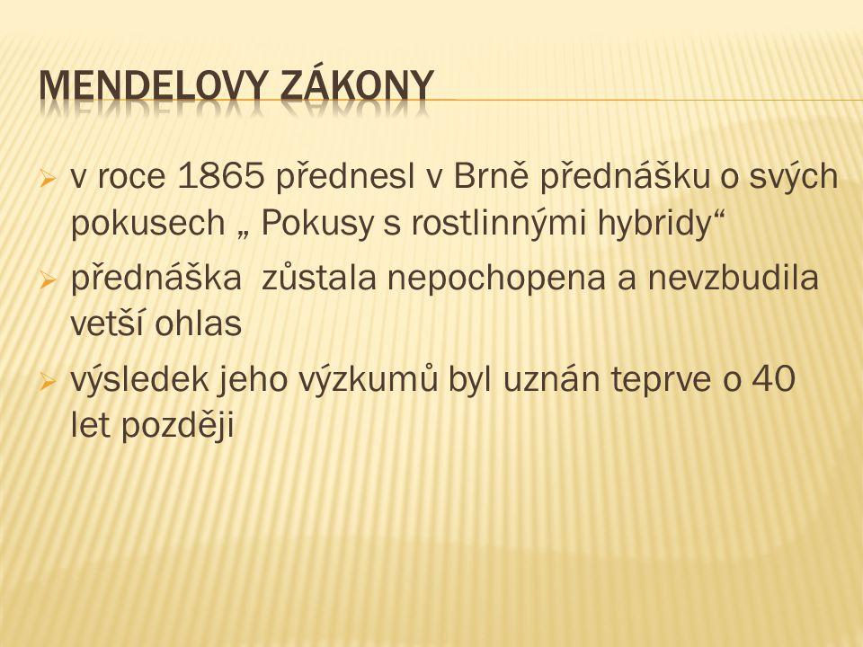 """MENDELOVY ZÁKONY v roce 1865 přednesl v Brně přednášku o svých pokusech """" Pokusy s rostlinnými hybridy"""