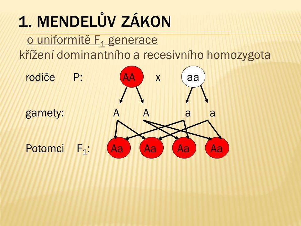 1. Mendelův zákon o uniformitě F1 generace