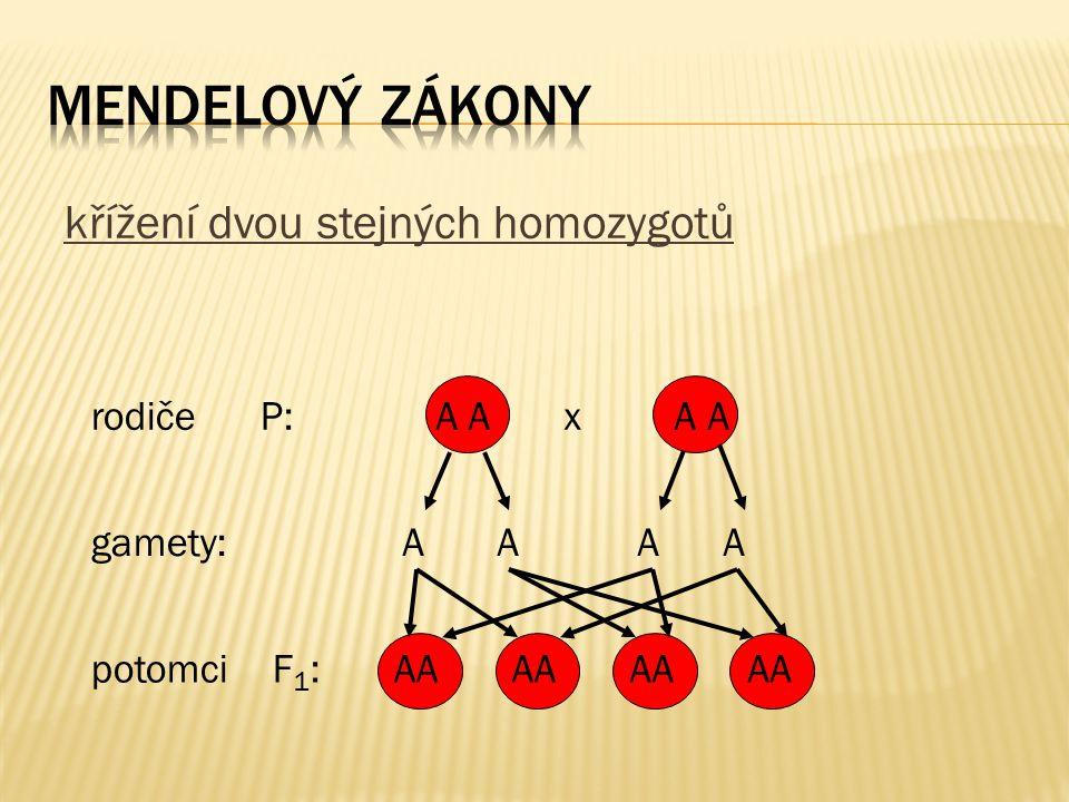 mendelový zákony křížení dvou stejných homozygotů rodiče P: A A x A A