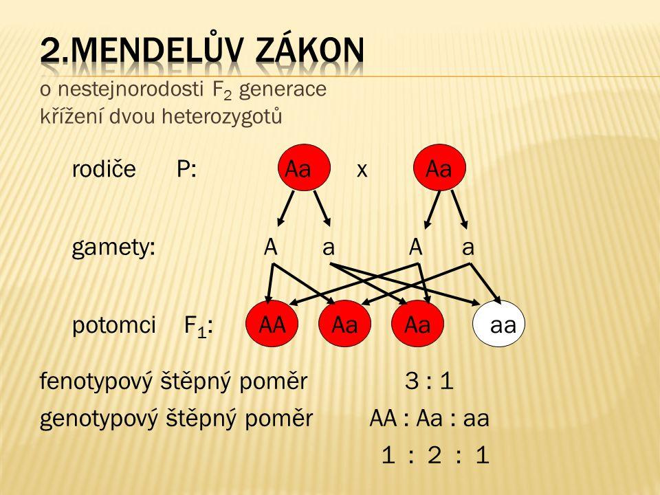 2.mendelův zákon rodiče P: Aa x Aa gamety: A a A a potomci F1: AA Aa
