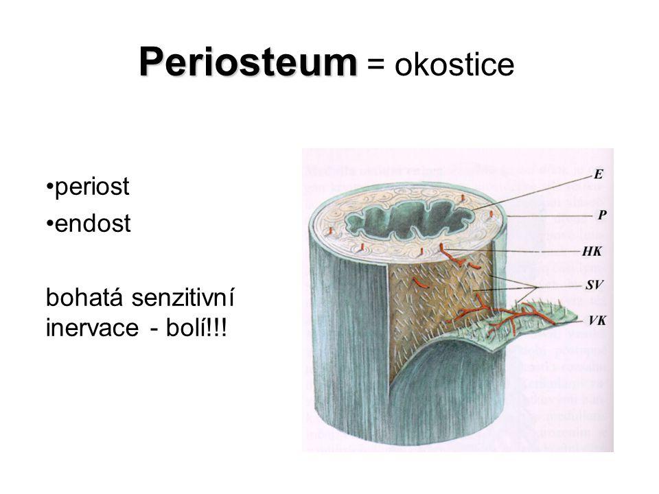 Periosteum = okostice periost endost