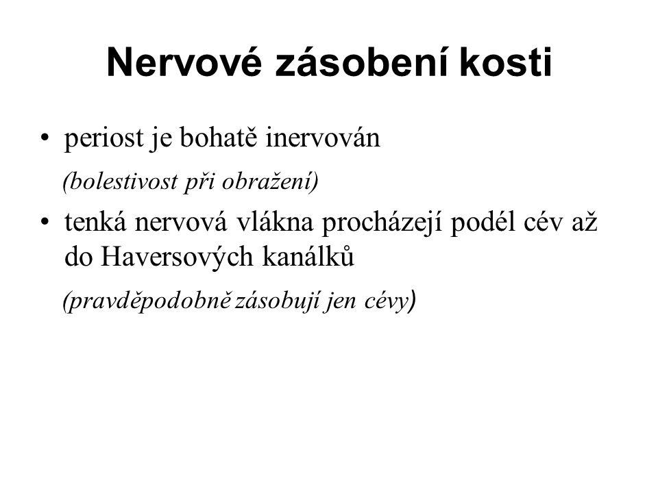 Nervové zásobení kosti