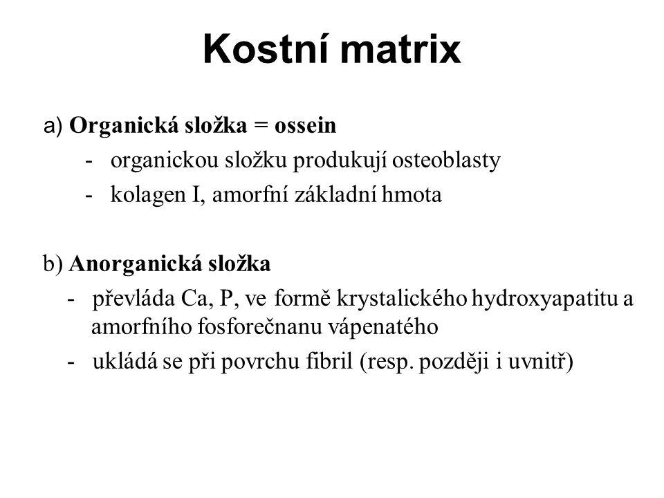 Kostní matrix - organickou složku produkují osteoblasty