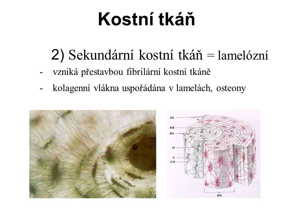 2) Sekundární kostní tkáň = lamelózní