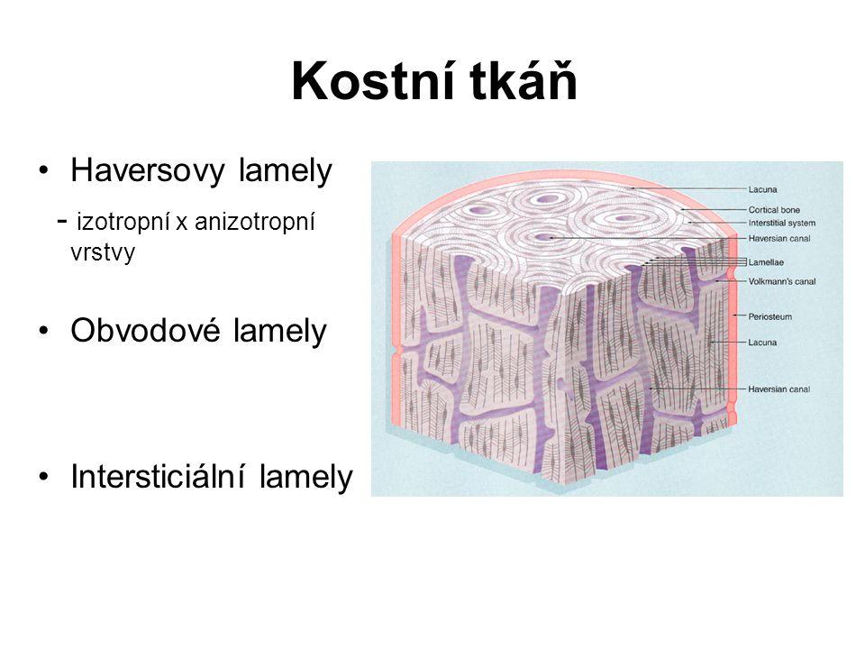 Kostní tkáň Haversovy lamely - izotropní x anizotropní vrstvy