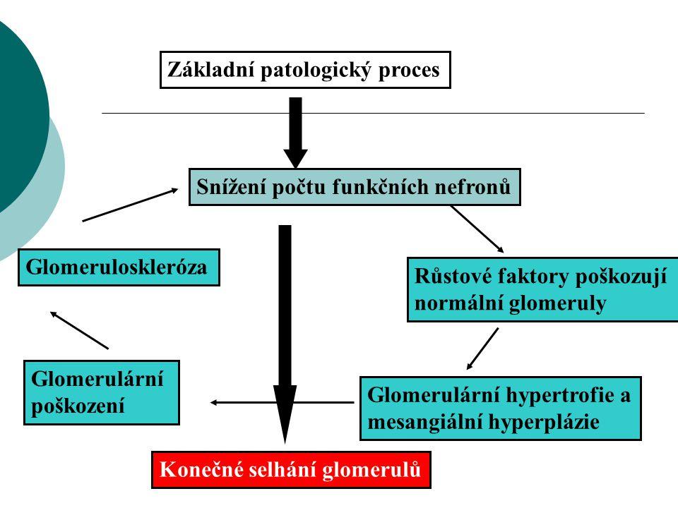 Základní patologický proces