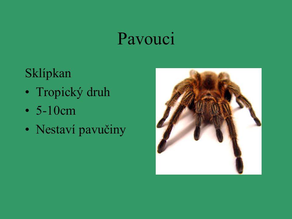 Pavouci Sklípkan Tropický druh 5-10cm Nestaví pavučiny