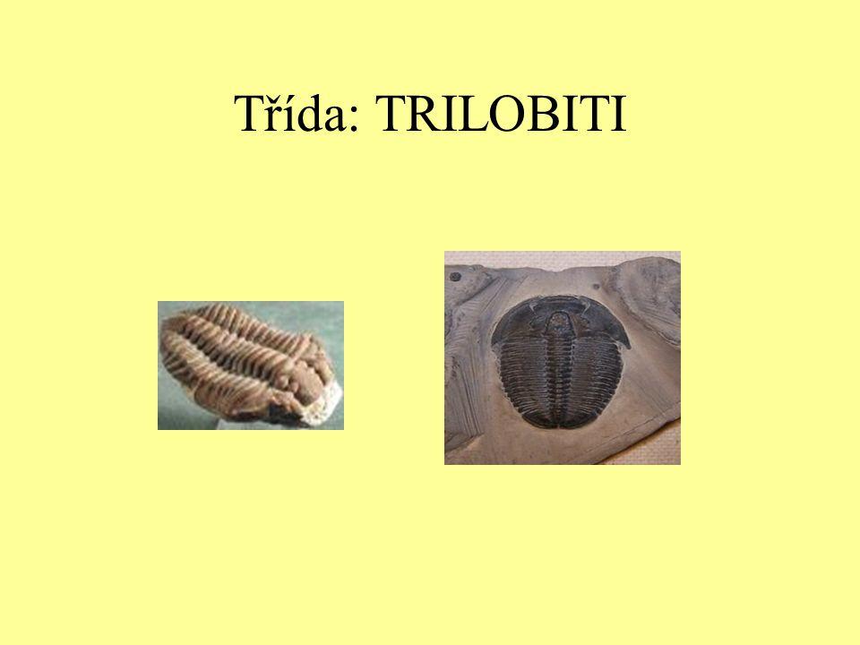 Třída: TRILOBITI