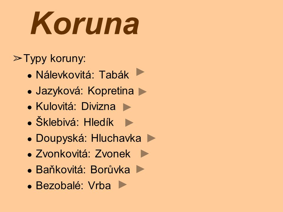 Koruna Typy koruny: Nálevkovitá: Tabák Jazyková: Kopretina