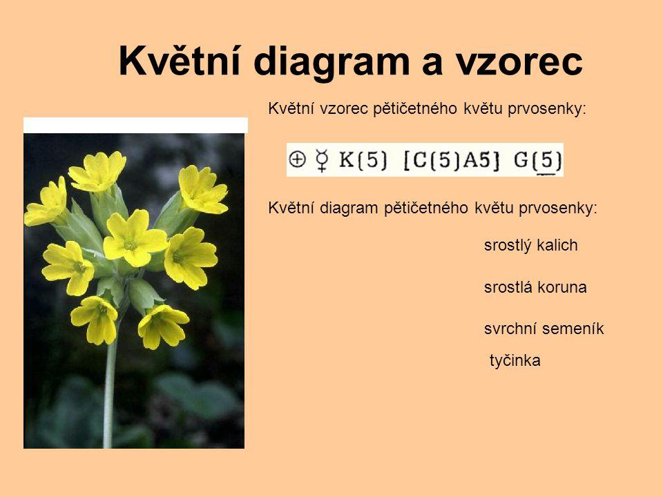 Květní diagram a vzorec