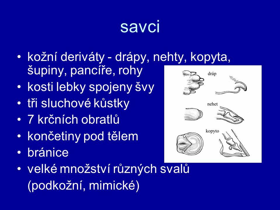savci kožní deriváty - drápy, nehty, kopyta, šupiny, pancíře, rohy