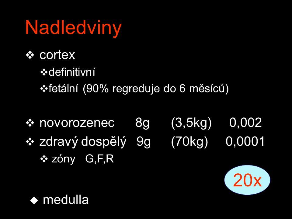 Nadledviny 20x cortex novorozenec 8g (3,5kg) 0,002