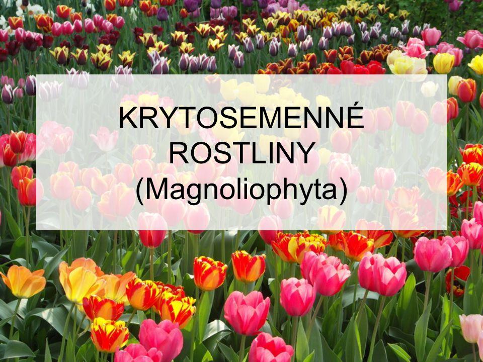 KRYTOSEMENNÉ ROSTLINY (Magnoliophyta)