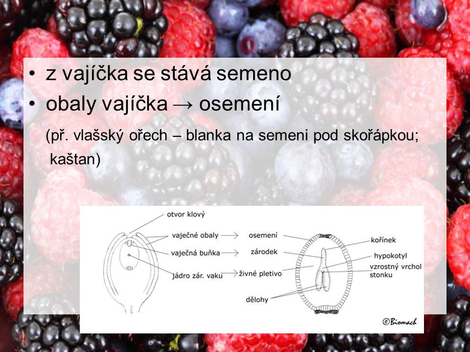 z vajíčka se stává semeno obaly vajíčka → osemení