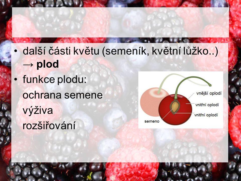 další části květu (semeník, květní lůžko..) → plod