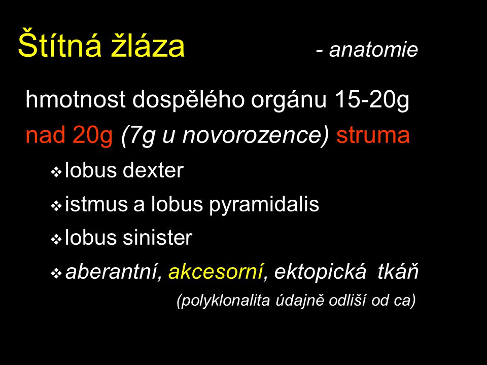 Štítná žláza - anatomie