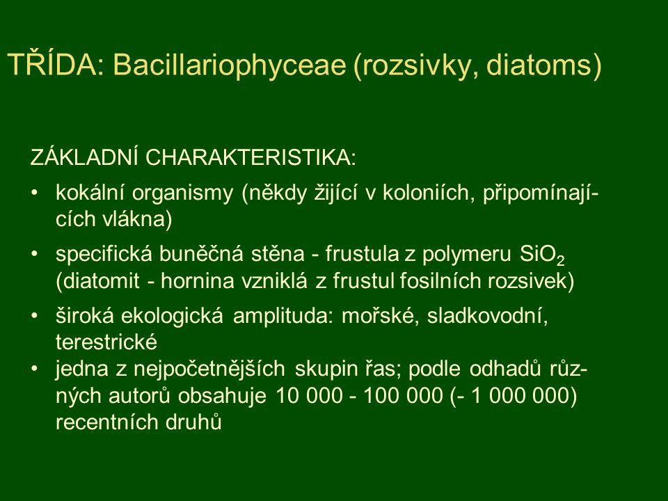 TŘÍDA: Bacillariophyceae (rozsivky, diatoms)