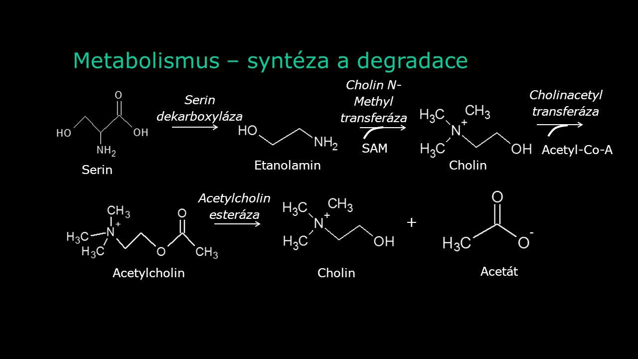 Metabolismus – syntéza a degradace